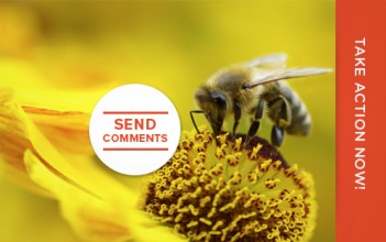 Add Your Voice to Protect Pollinators from Neonicotinoid Poisoning