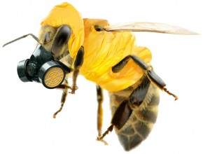 Silent Spring 2.0 Awaits While Governments Ignore Calls for a Neonicotinoid Moratorium