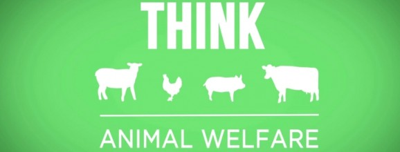 New Video About Organic: Think Animal Welfare