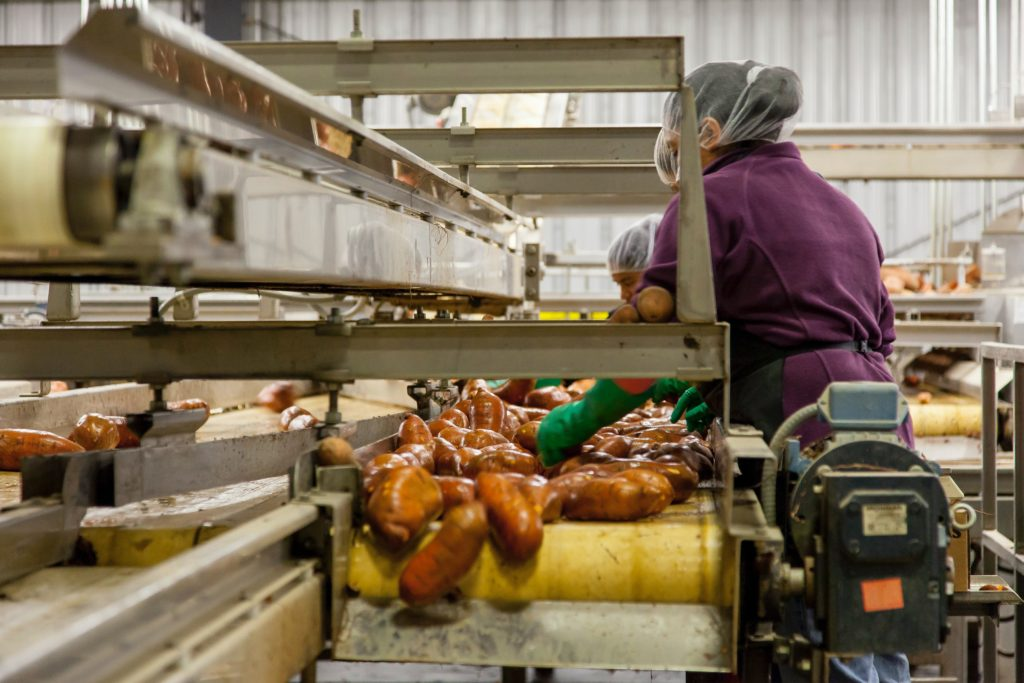 Woman cleaning sweet potatoes at processing facility